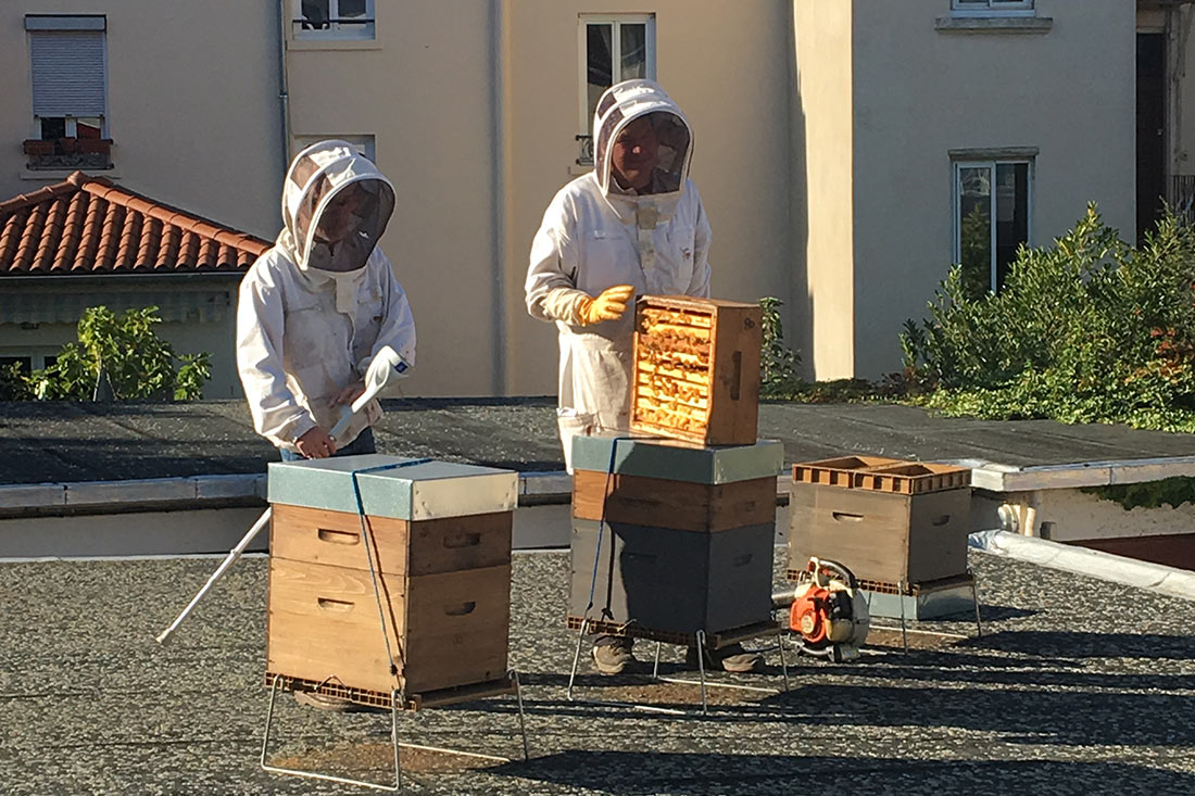 Honey being harvested from our hives at Fifty Bees' office.