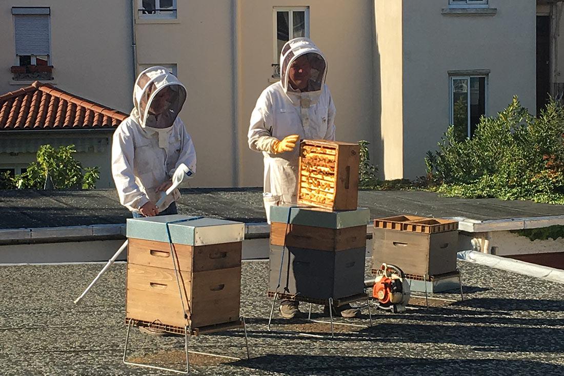 Apiculteurs sur le toit des bureaux de Fifty Bees